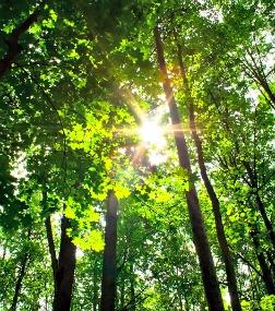 sun shining through forest trees